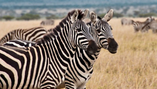 Safari Serengeti: Tanzania Lodge & Tented Safari