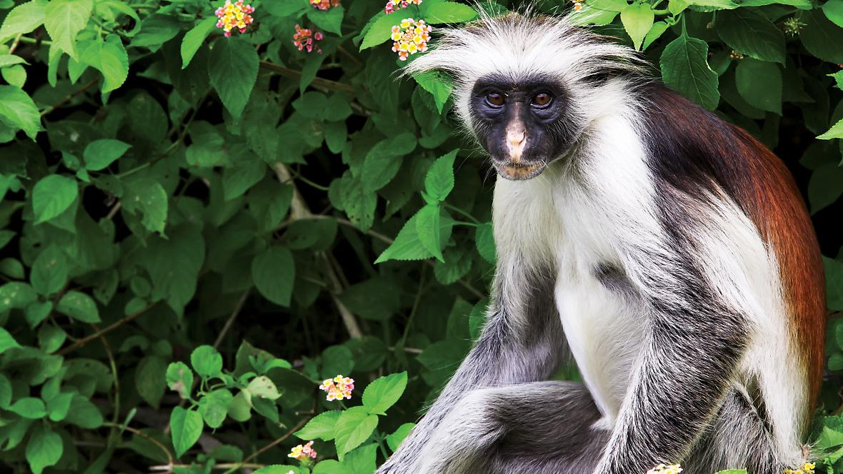 Tanzania Safari | The Serengeti & Ngorongoro Crater| Overseas