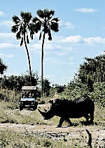 Encounter rhinos and other wildlife on safari in National Park