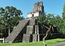 Explore Tikal ruins