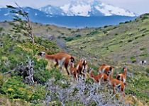 Discover diverse wildlife in Chile