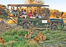 Encounter lions during a safari in the Okavango Delta