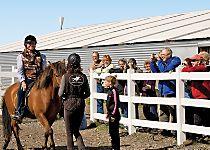 Explore Iceland on a horseback riding tour