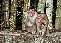 Explore Periyar Wildlife Sanctuary on an elephant ride