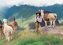 Explore Machu Picchu during a tour of Peru