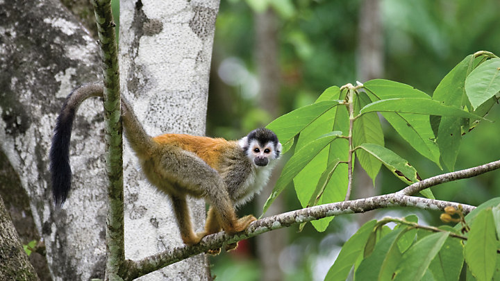 See Costa Rica's vibrant wildlife in Manuel Antonio National Park