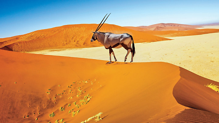 View antelope and other wildlife in the Namib Desert