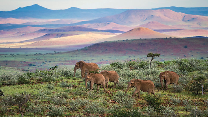 See elephants while on safari in Namibia