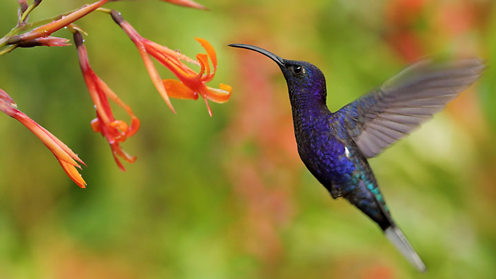 Discover abundant wildlife in Monteverde Cloud Forest
