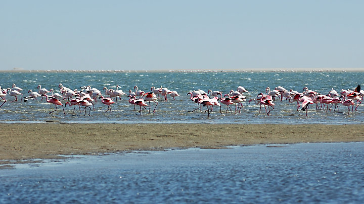 Discover Walvis Bay on a cruise of the protected lagoon
